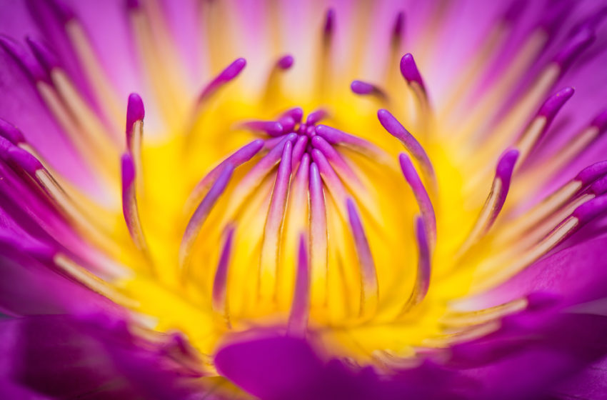 How to Take Good Macro Photos with Your Camera